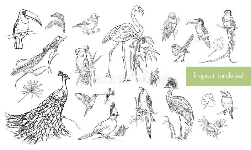 Realistisk hand dragen kontursamling av härliga exotiska tropiska fåglar med palmblad Flamingo kakadua vektor illustrationer