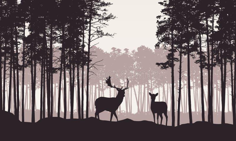 Realistisk illustration av landskapet med barrskogen och retro himmel för morgon Hjortar och doe med horn på kronhjortanseende Pa vektor illustrationer