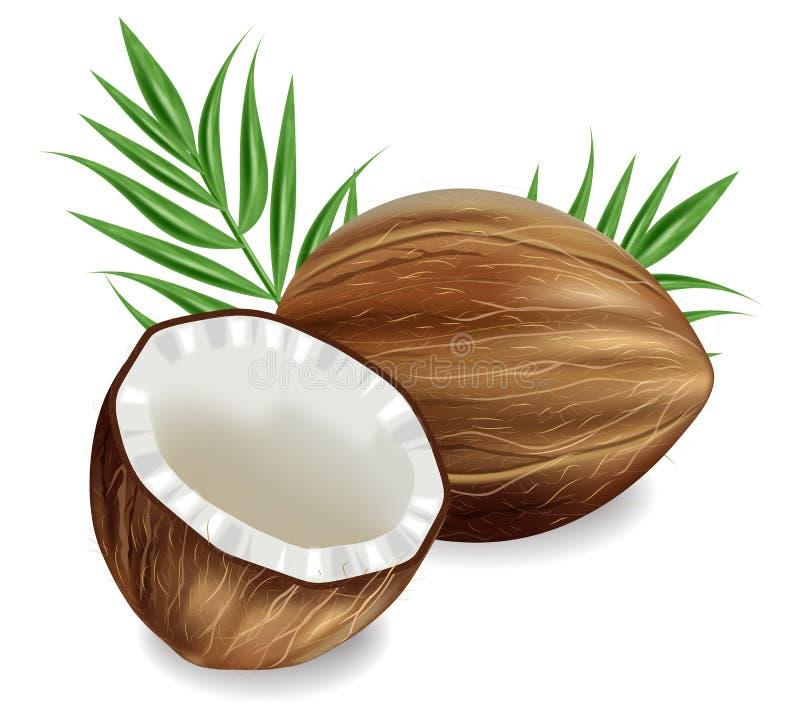 Realistisk kokosn?tvektor exotisk bakgrund f?r mallv?ndkrets Detaljerade illustrationer 3d vektor illustrationer