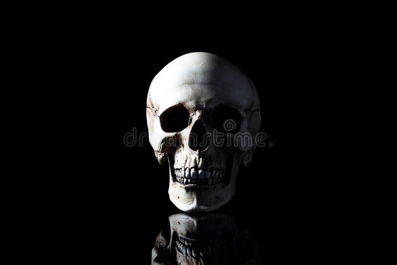 Realistisk modell av en mänsklig skalle med tänder royaltyfri bild