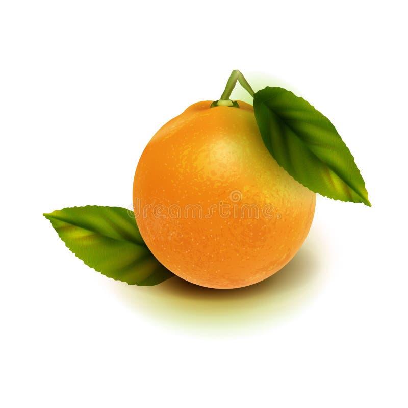 Realistisk orange fruktisolat Apelsin med sidor som isoleras på vit royaltyfri bild