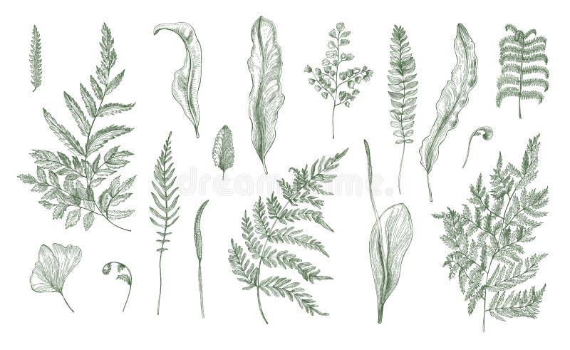 Realistisk samling för ormbunke Den drog handen spirar, ormbunksbladet, sidor, och stammar ställer in Svartvit vektorillustration stock illustrationer