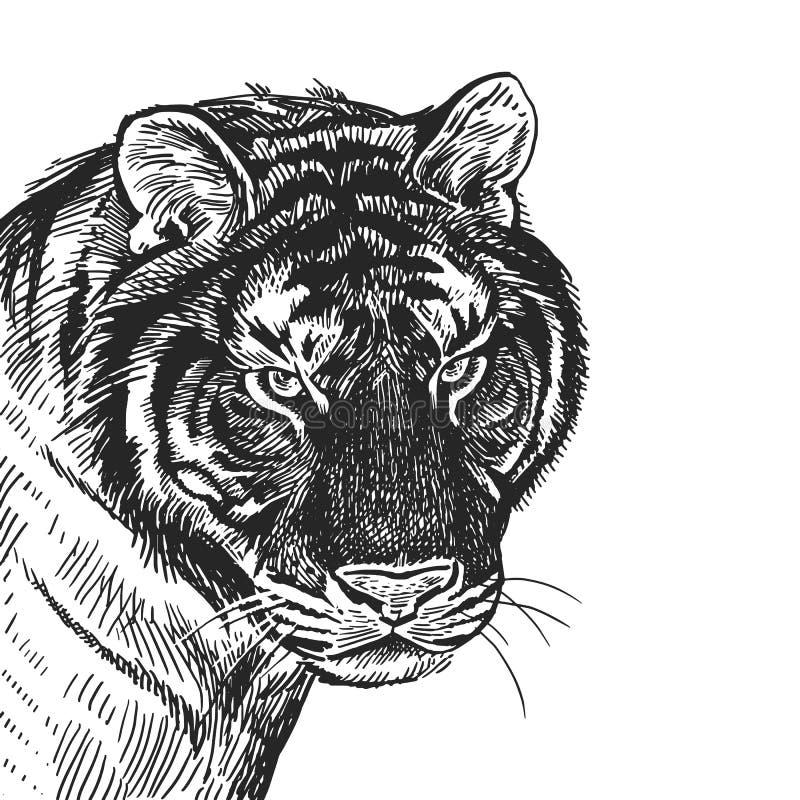 Realistisk stående av den afrikanska djura tigern Tappninggravyr B stock illustrationer