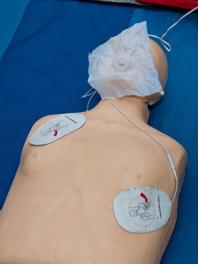 Realistisk utbildande falsk skyltdockadocka för simulator för medicinskt tillvägagångssätt royaltyfri fotografi