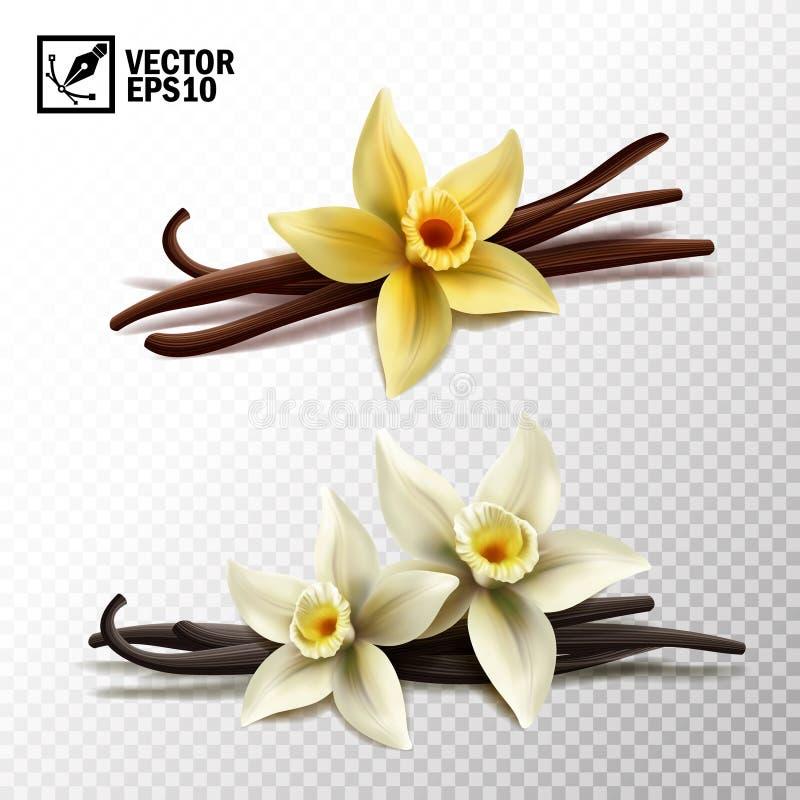 realistisk vektor isolerade pinnar för vanilj 3d och vaniljblommor i gult och vitt stock illustrationer