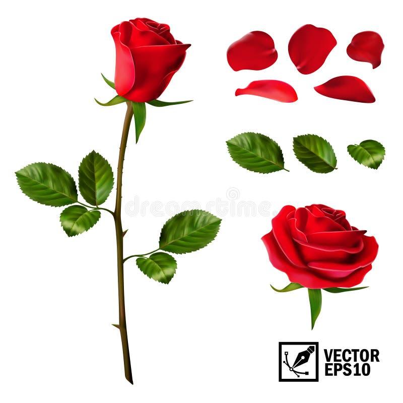 Realistisk vektorbeståndsdeluppsättning av kronblad för röda rosor, sidor, knoppen och en öppen blomma vektor illustrationer