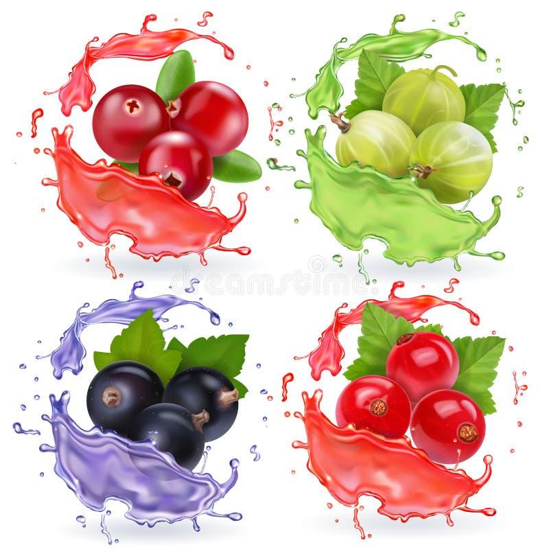 Realistiska bär i fruktsafter plaskar uppsättningen Samling för tranbär för svart vinbär för krusbär och för röd vinbär vektor illustrationer