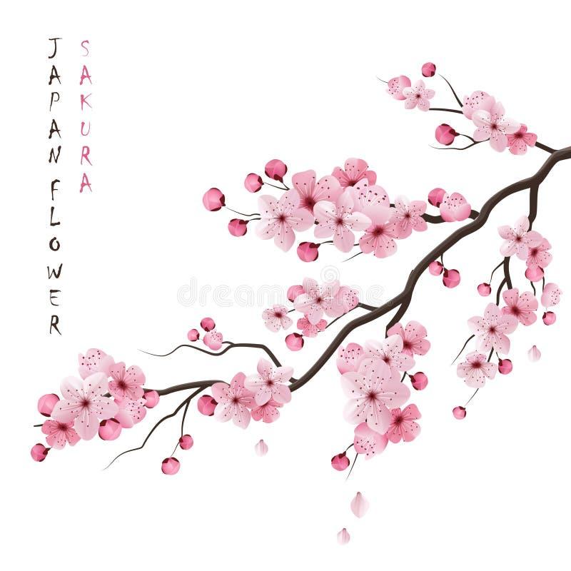 Realistiska Sakura Branch vektor illustrationer