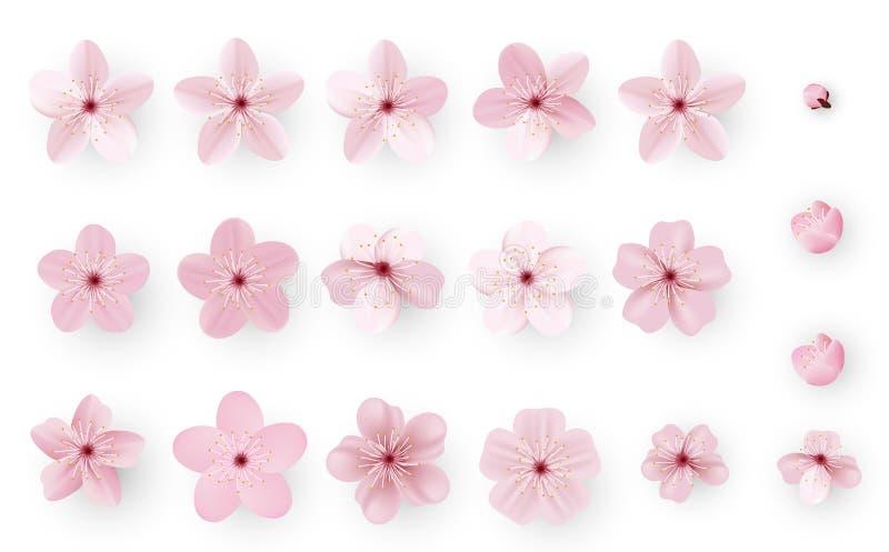 Realistiska sakura eller körsbärsröd blomning; Japansk vårblomma Sakura; Rosa Cherry Flower vektor illustrationer