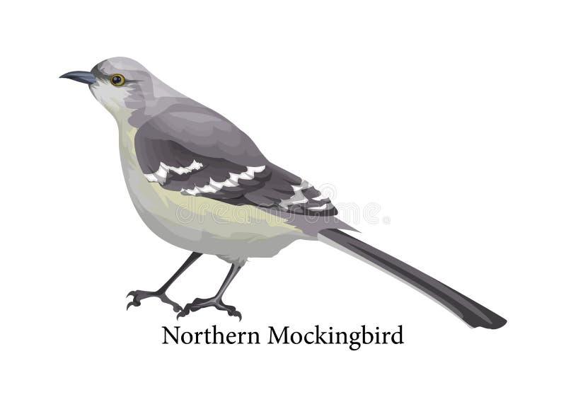 Realistiskt exotiskt för nordlig härmfågel med den gråa näbb vektor illustrationer