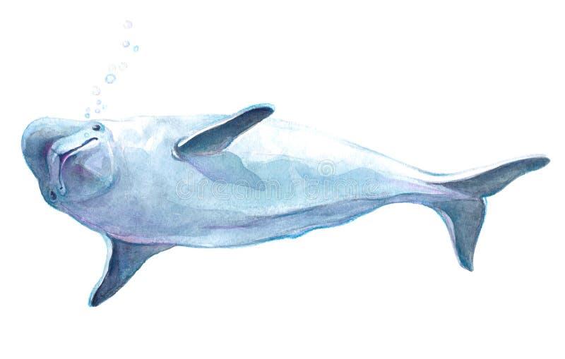 Realistiskt isolerat delfindjur för vattenfärg vektor illustrationer