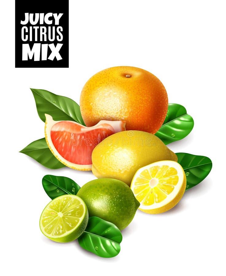 Realistyczna ilustracja świeże cytrus owoc z liśćmi royalty ilustracja