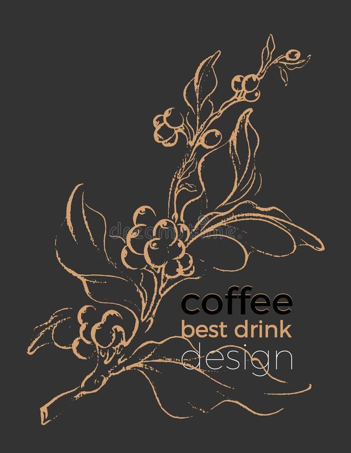 Realistyczna kawy gałąź Botaniczny konturowy rysunek wektor royalty ilustracja