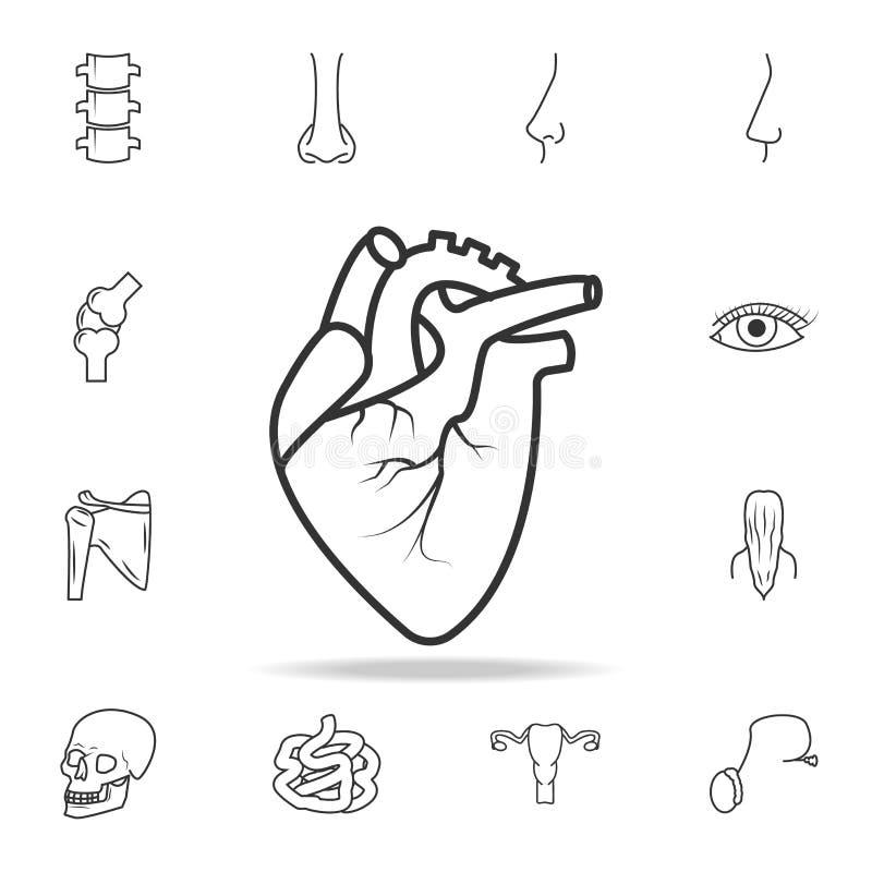 Realistyczna Kierowa ikona Szczegółowy set ciało ludzkie części ikony Premii ilości graficzny projekt Jeden inkasowe ikony dla we ilustracja wektor