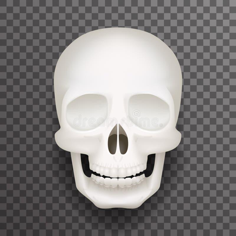 Realistyczna ludzka czaszka odizolowywająca 3d mody realistycznego mockup tła projekta wektoru przejrzysta ilustracja royalty ilustracja