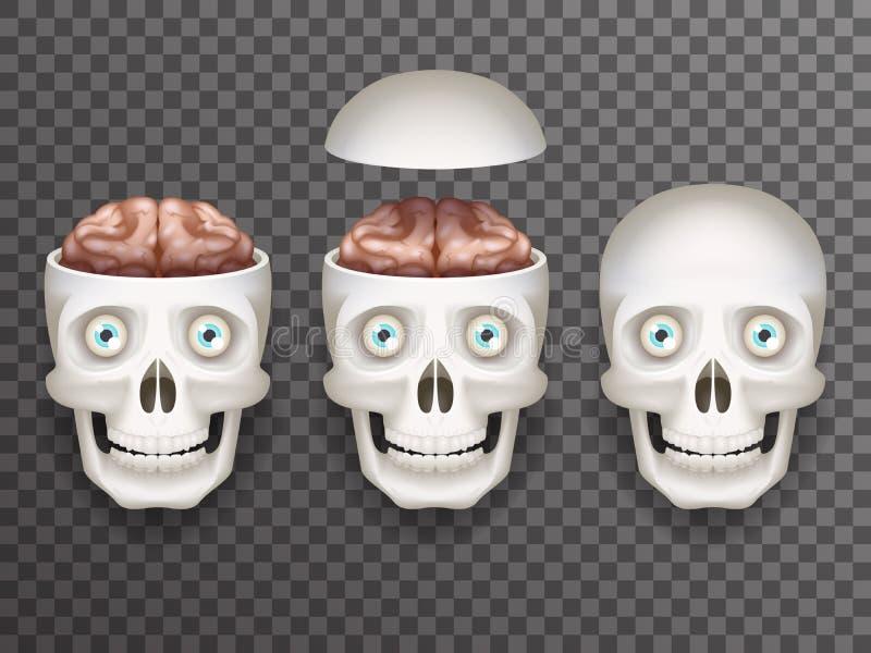 Realistyczna ludzka czaszka z oczami i mózg odizolowywać ikonami ustawia 3d realistycznego mockup tła projekta przejrzystego wekt ilustracji