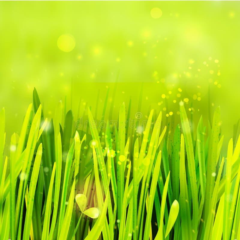 Realistyczna trawa przy zielonym środowiskiem ilustracja wektor