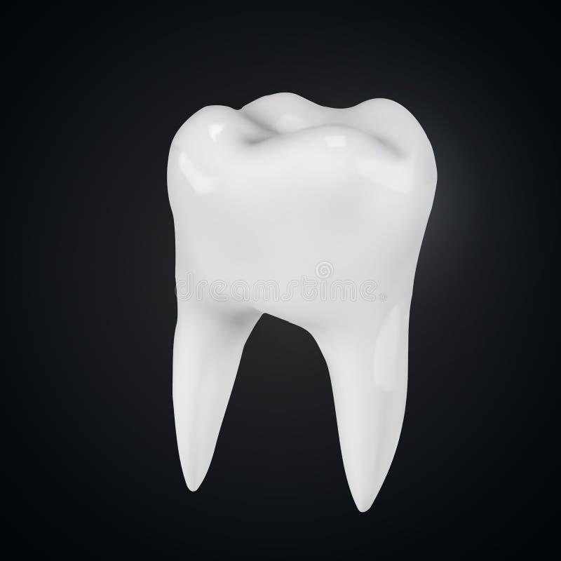 Realistyczna wektorowa ilustracja biały ząb ilustracji