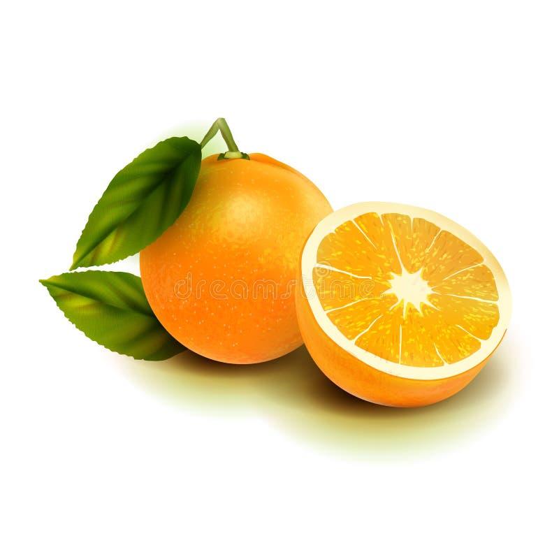 Realistyczna wektorowa pomarańczowa owoc odizolowywa Pomarańcze z liśćmi odizolowywającymi na bielu obraz stock