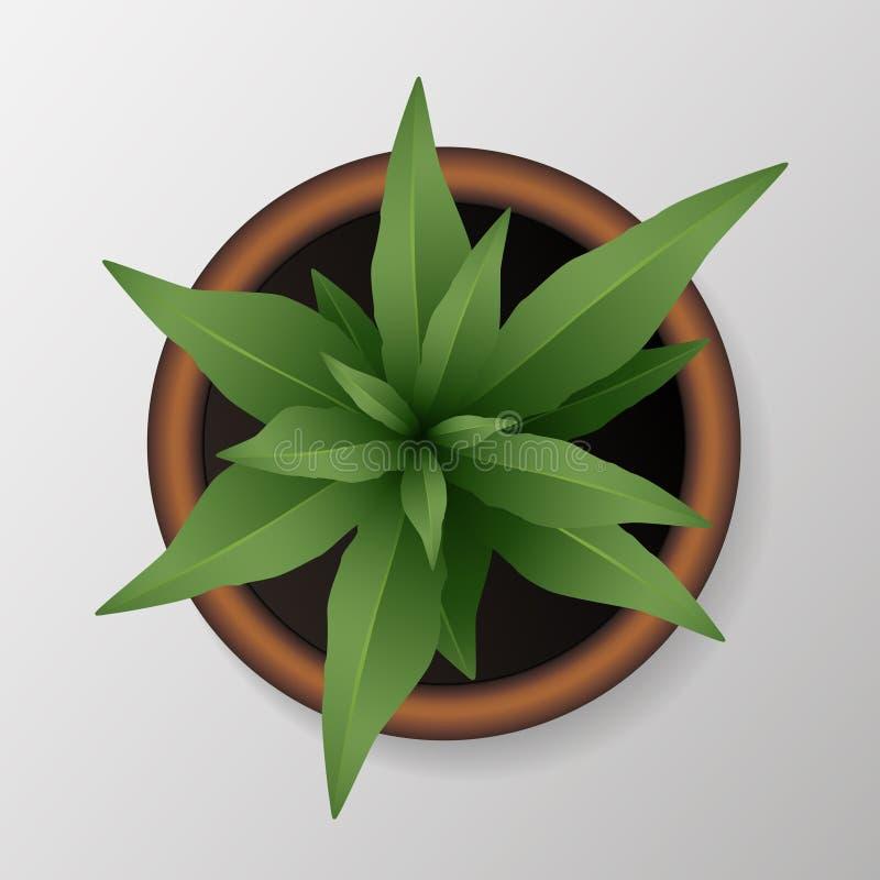 Realistyczna zielona roślina z zielenią opuszcza w z góry flowerpot - wektorowej ilustracji ilustracja wektor