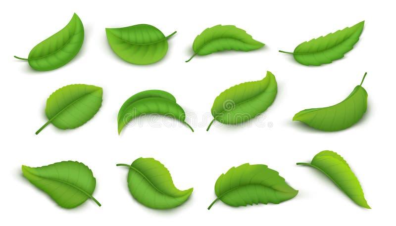 Realistyczni li?cie Zieleni wiosny rośliny liście odizolowywający na bielu, 3D natury elementów żywi herbaciani liście Wektorowy  ilustracji