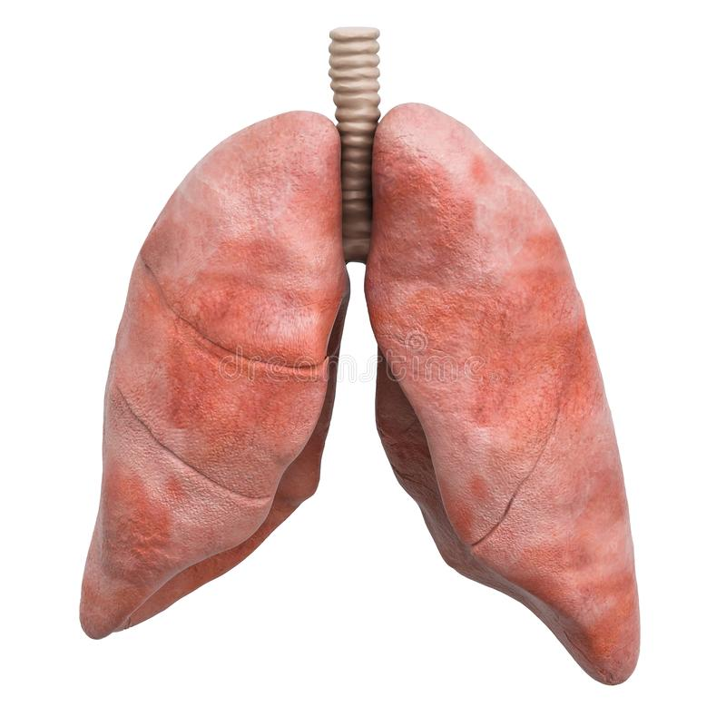 Realistyczni ludzcy płuca, 3D rendering royalty ilustracja