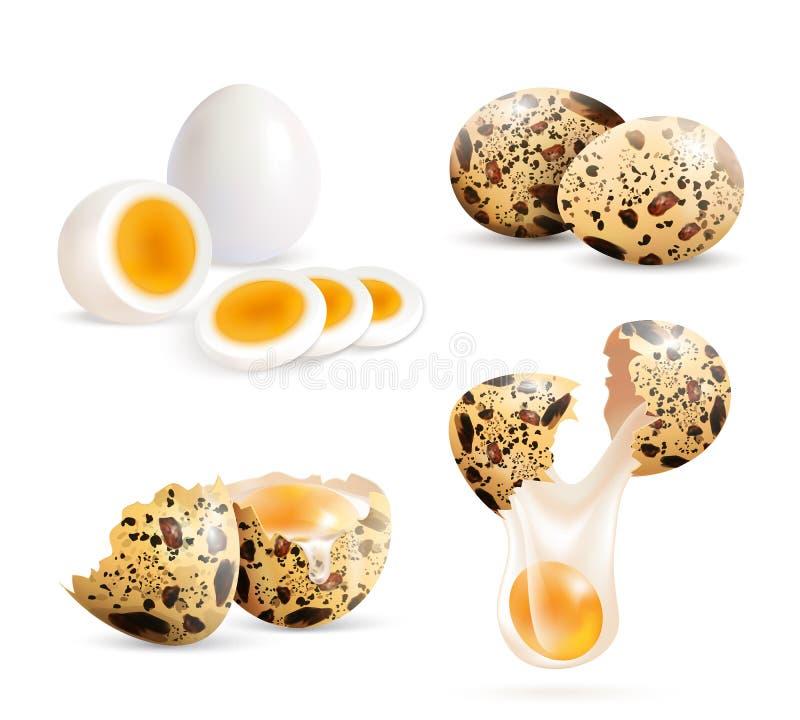 Realistyczni przepiórek jajka Ustawiający royalty ilustracja