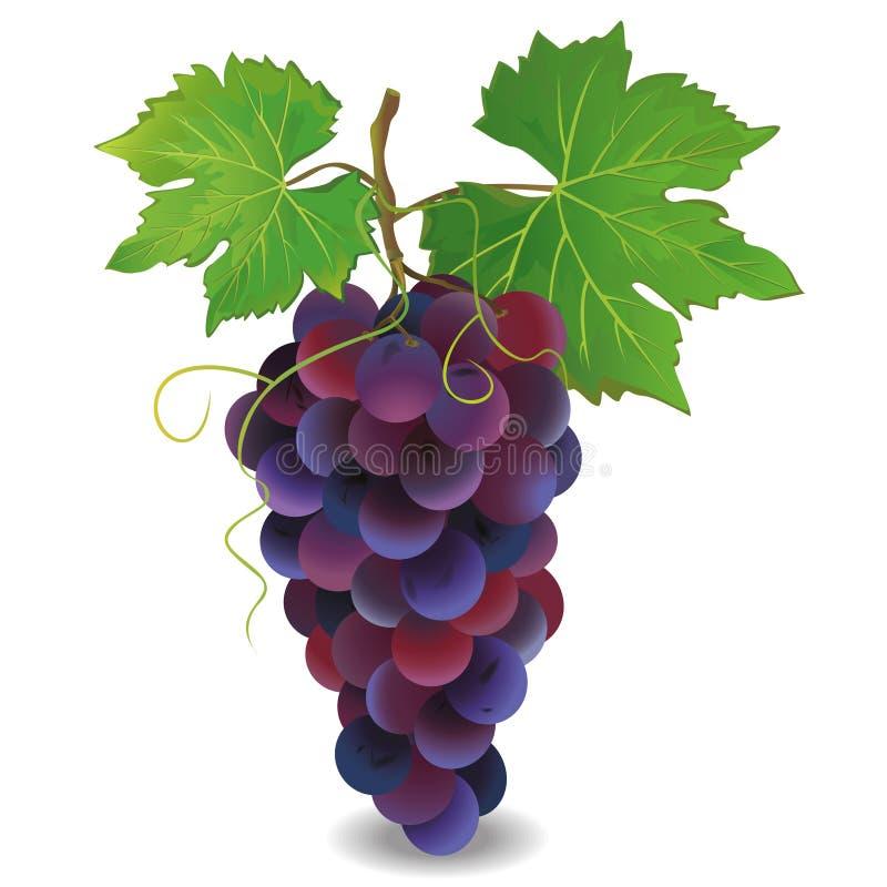 Realistyczny błękitny winogrono nad bielem royalty ilustracja