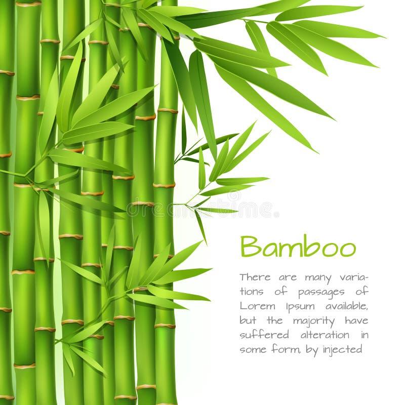 Realistyczny bambusowy tło ilustracji