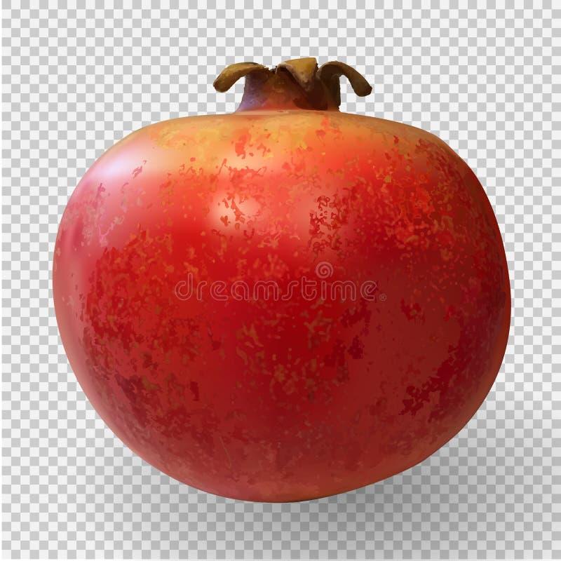 Realistyczny 3D Wektorowy Ilustracyjny kolorowy słodki dojrzały granatowiec ilustracja wektor