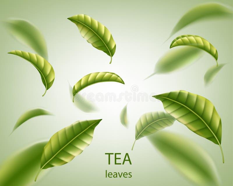 Realistyczny herbacianych liści tło Zielonych liści herbaciany kłębowisko w powietrzu dla projekta, reklamy i pakować, wektor ilustracji