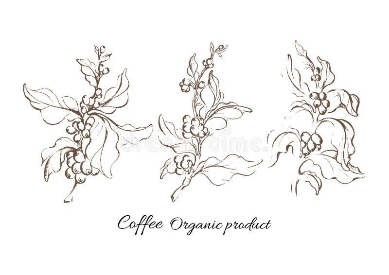 Realistyczny kawowy ustawiający z liściem i naturalną fasolą ilustracji