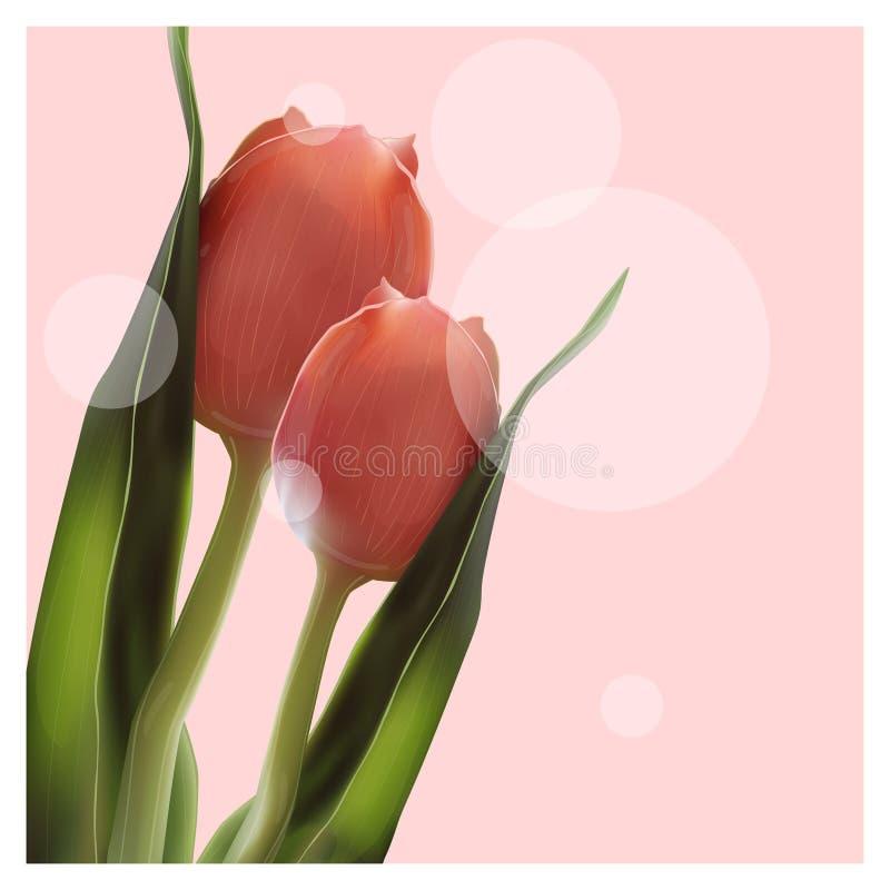 Realistyczny kwiatu tulipan Tulipan w wektorze eps10 ilustracji