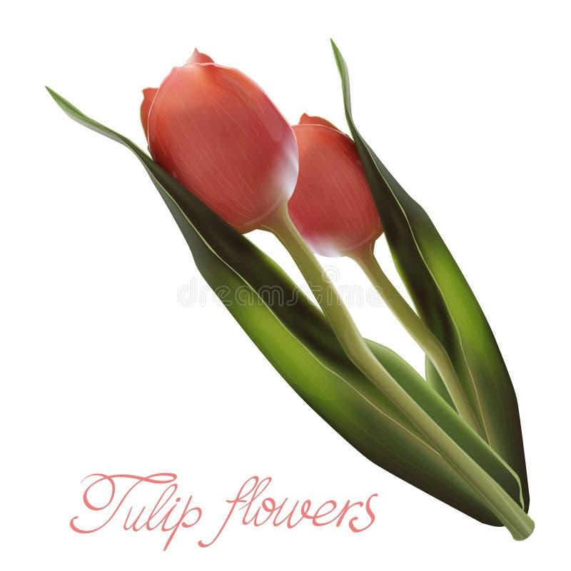 Realistyczny kwiatu tulipan Tulipan w wektorze eps10 ilustracja wektor