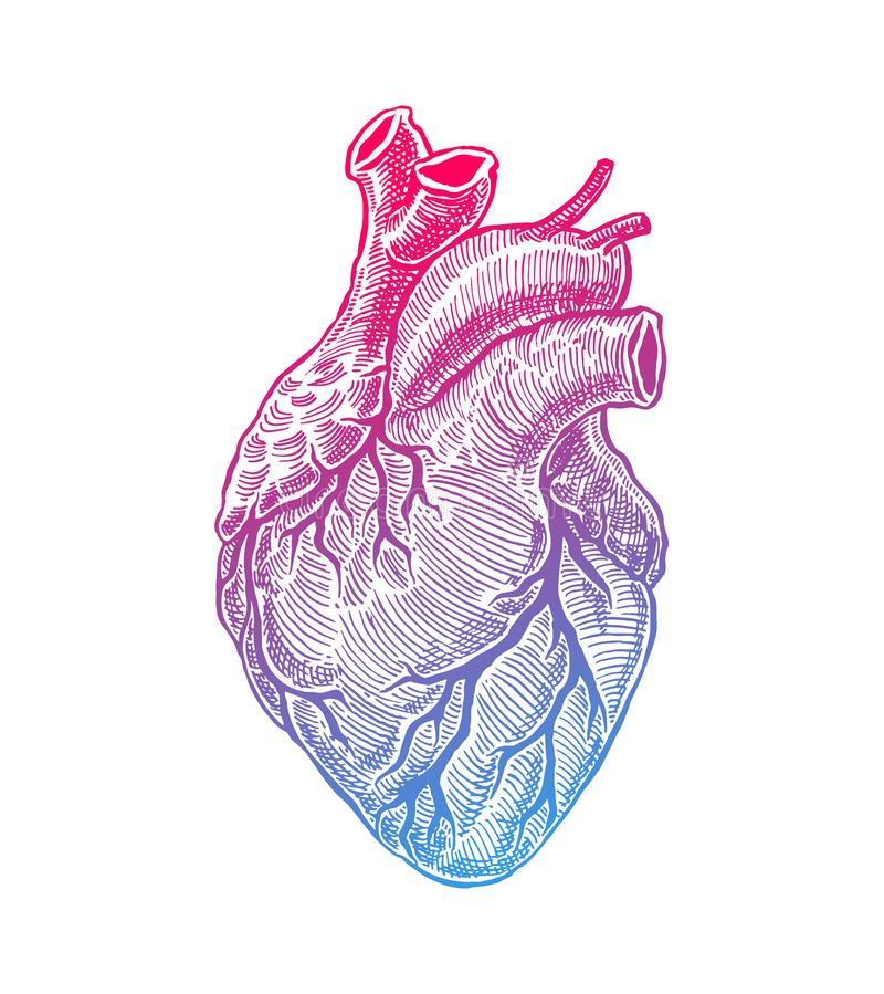 Realistyczny ludzki serce ilustracji