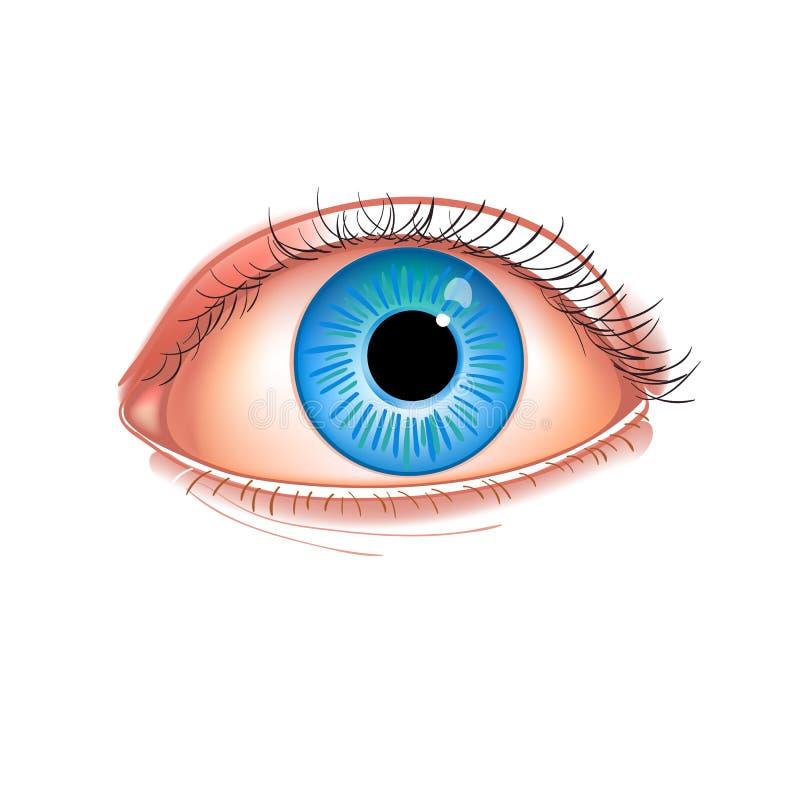 Realistyczny ludzkiego oka zakończenie Ludzkiego oka błękit odizolowywający na białej photorealistic wektorowej ilustraci ilustracja wektor