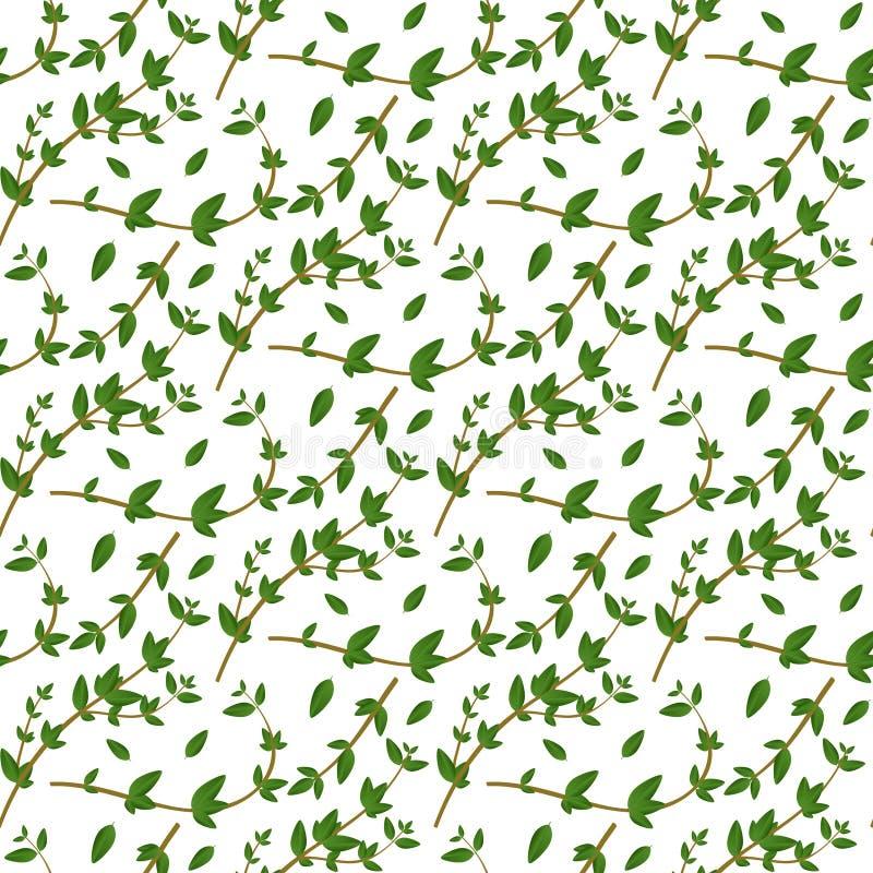 Realistyczny naturalny bezszwowy wzór z wiecznozielonym ziele Macierzanka liście na białym tle i gałąź Flora styl Wektorowy illus ilustracja wektor