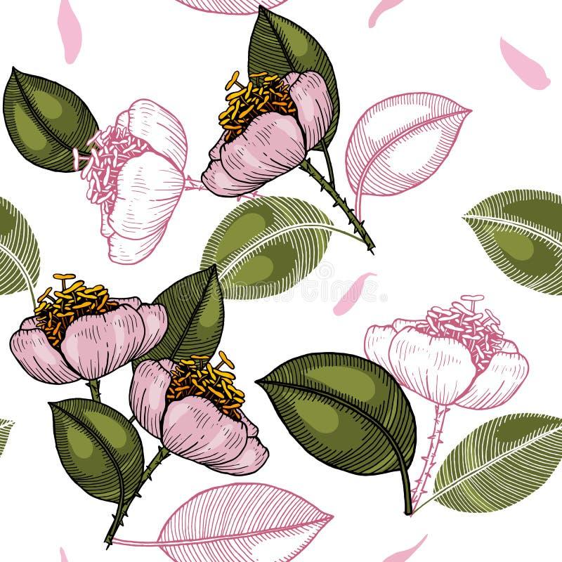 Realistyczny odosobniony bezszwowy kwiatu wzór ornamentu geometryczne tła księgi stary rocznik royalty ilustracja