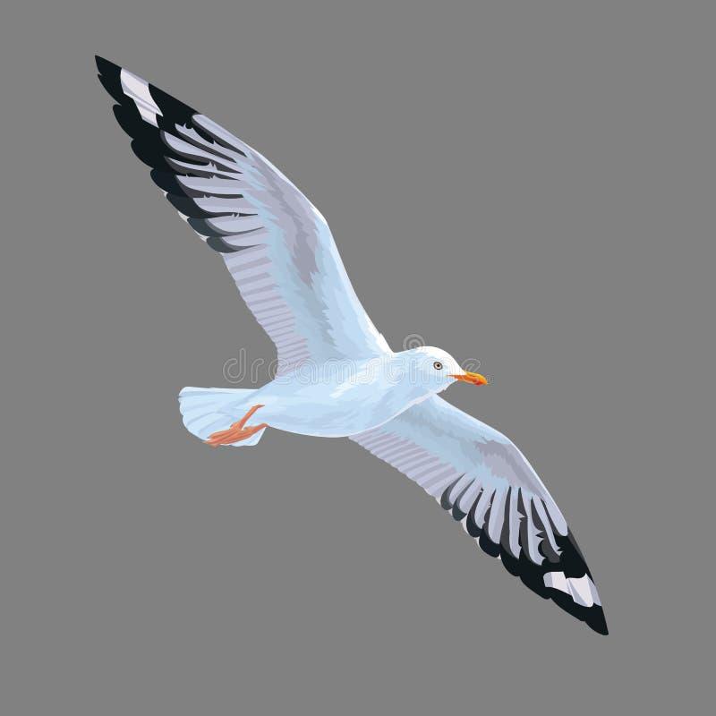 Realistyczny ptasi Seagull odizolowywający na popielatym tle Wektorowa ilustracja Europejski Śledziowy frajer royalty ilustracja