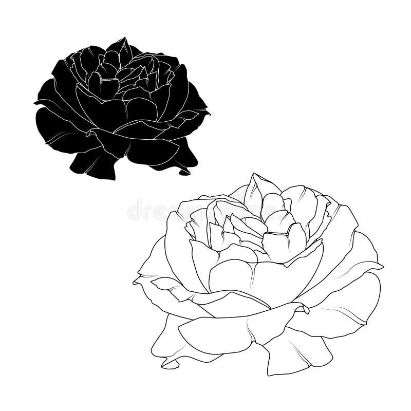 Realistyczny róża kwiatu kwiatu czerni biel odizolowywający ilustracji