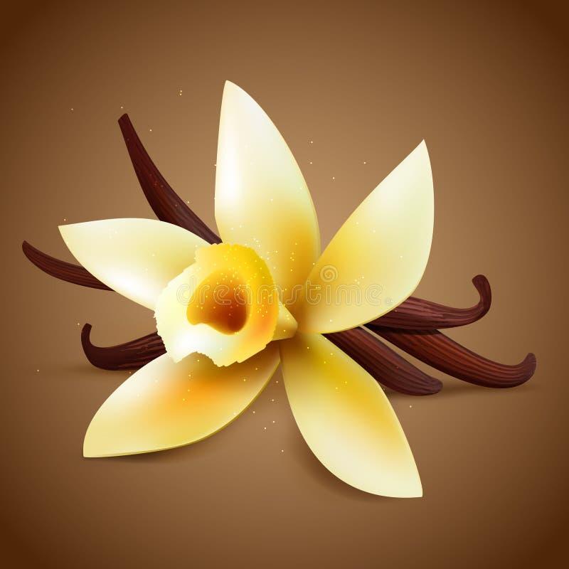 Realistyczny waniliowy kwiat ilustracji