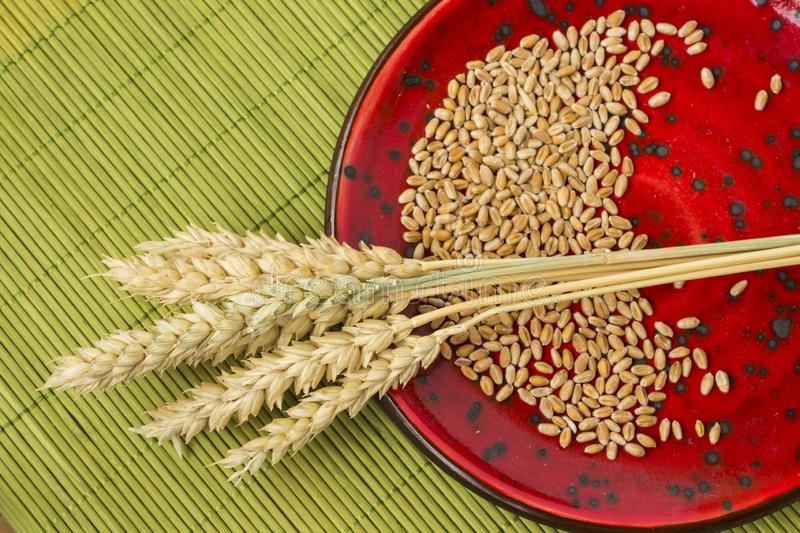 Reap of durum wheat from different varieties.  Wheat grains in a plate. Top view stock image
