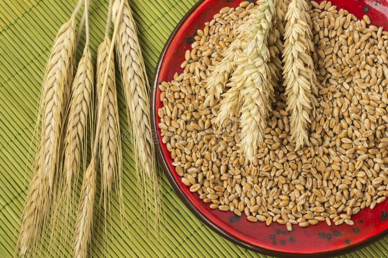Reap of durum wheat from different varieties.  Wheat grains in a plate. Top view stock photography