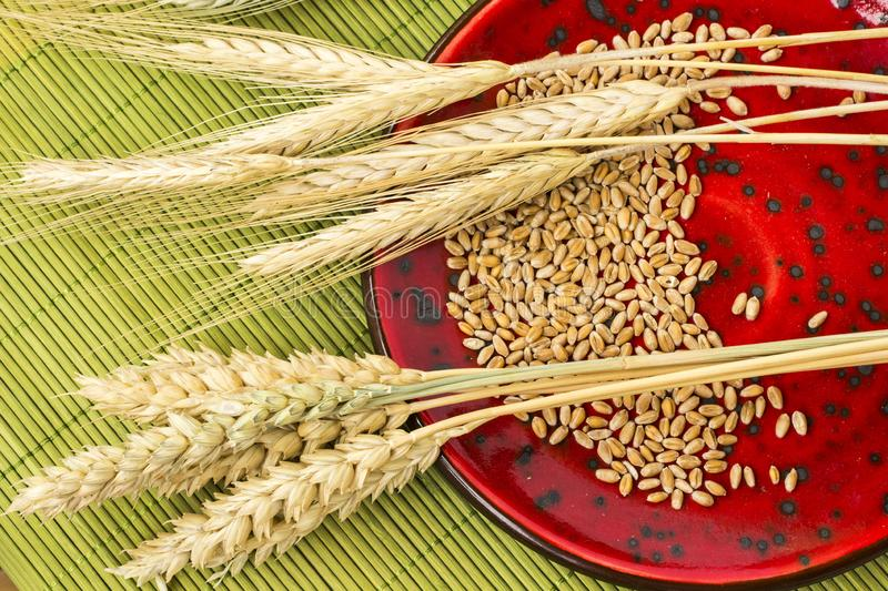 Reap of durum wheat from different varieties.  Wheat grains in a plate. Top view royalty free stock photography