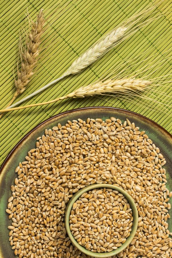 Reap of durum wheat from different varieties.  Wheat grains in a plate. Top view royalty free stock photo