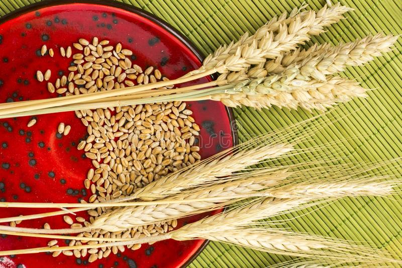 Reap of durum wheat from different varieties.  Wheat grains in a plate. Top view royalty free stock photos
