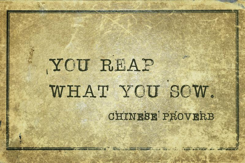 Reap what sow CP. You reap what you sow - ancient Chinese proverb printed on grunge vintage cardboard stock illustration