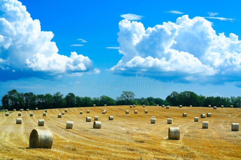 Download Reaped Field And Straw Rolls Royalty Free Stock Image - Image: 1398776