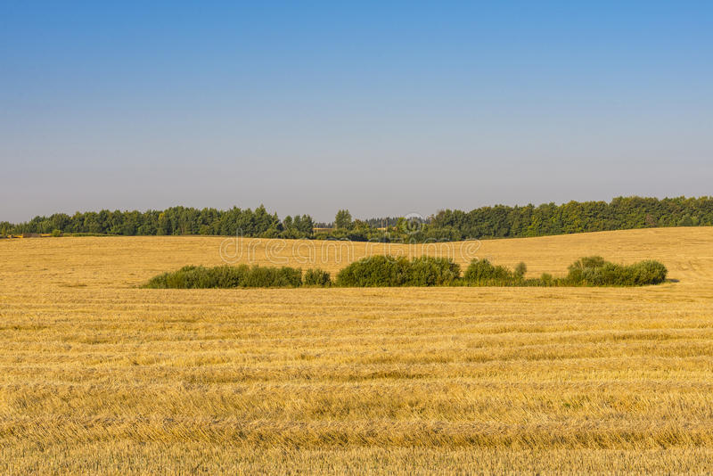 Reaping. Time in summer in Belarus stock photography