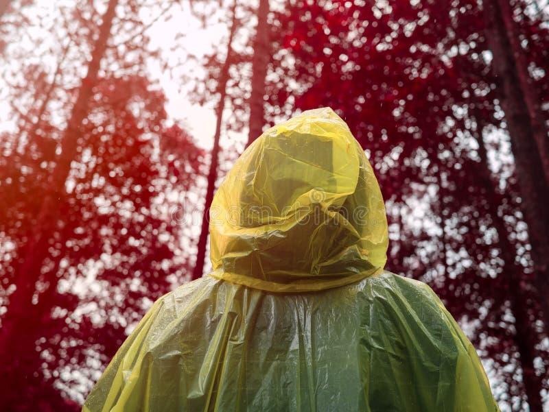 Rear of Asian woman wearing yellow raincoat stand in rain.  stock photo